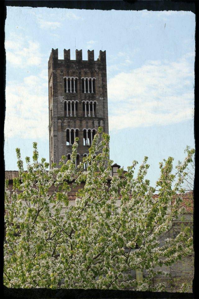 Vista des de la muralla de Lucca VII.